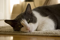 eliminate the pet odors in your home with professional carpet cleaning